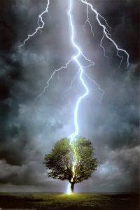 Lightning-Striking-Tree-Poster-C102_zps6b49f128